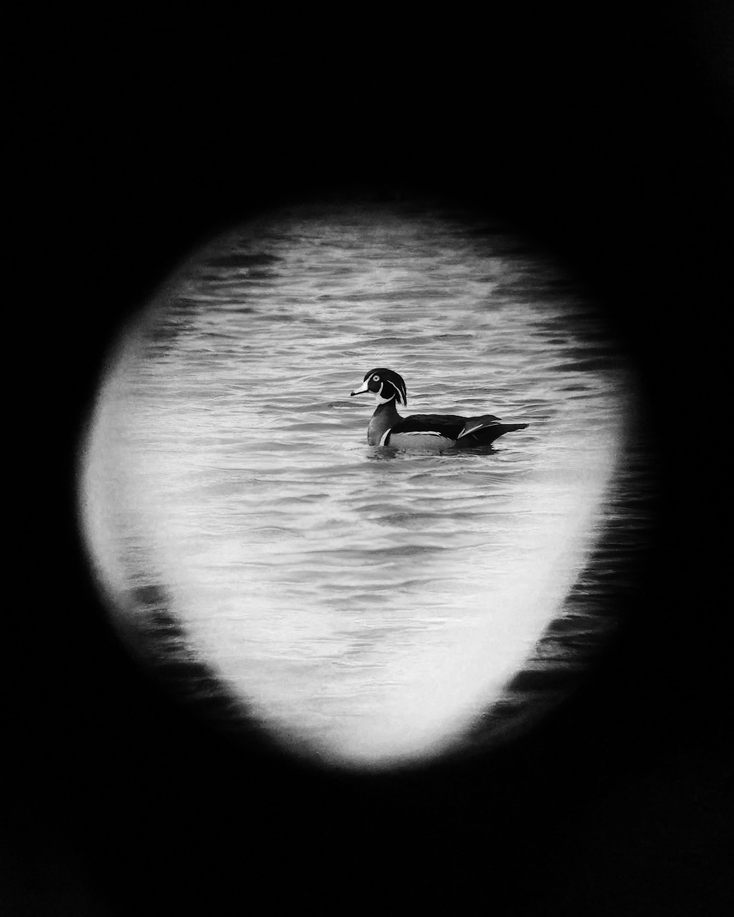 iScoped_WoodDuck_02