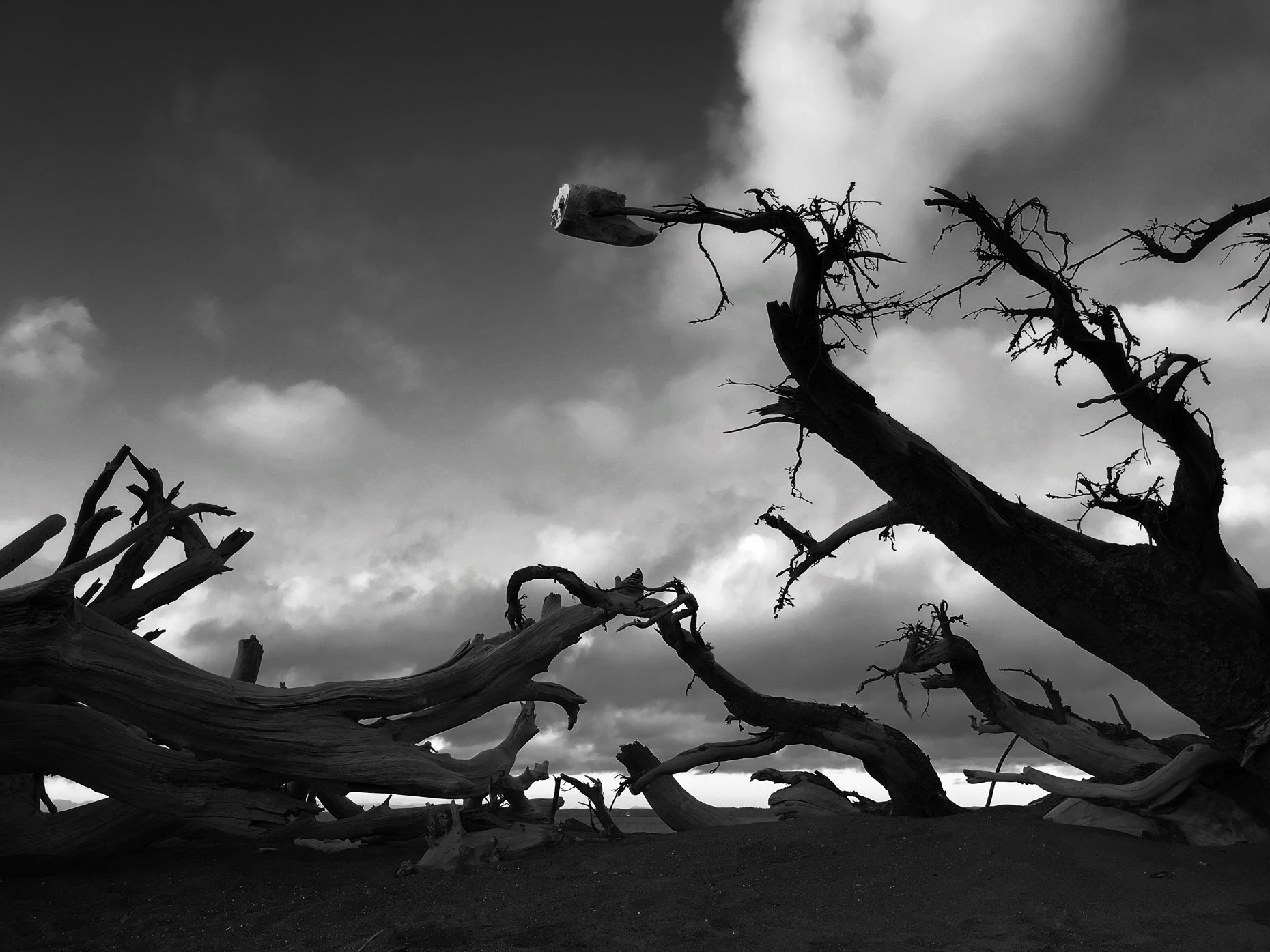 ghoulish_trees_Qual08